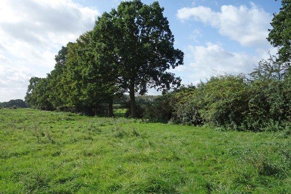 Im westlichen Teil des Gebietes befindet sich eine strukturreiche Heckenlandschaft (P. Salm)
