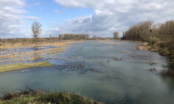 Wenn die Aue im Frühjahr überschwemmt ist, findet der Storch optimale Nahrungsbedingungen vor (P. Salm)