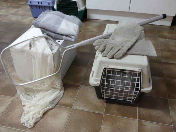 Transportbox bzw. Karton, stabile Handschuhe, ein Kescher oder ersatzweise eine Decke sind recht hilfreich, wenn man einen verletzten Greifvogel oder eine Eule einfangen möchte (D. Hegemann)
