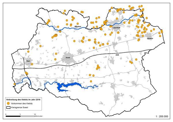 Verbreitung des Kiebites im Kreis Soest 2019