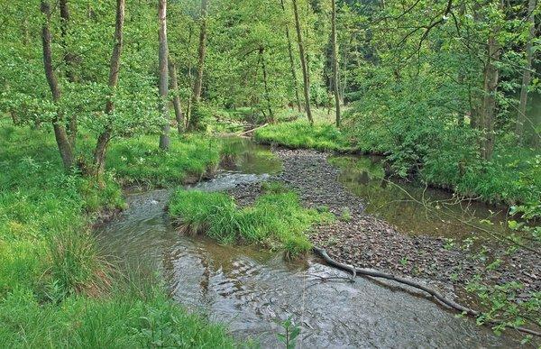 DeDas renaturierte Hevetal gehört als Teil des Arnsberger Waldes zu den Naturschätzen im südlichen Teil des Kreisgebietes (J. Drüke)