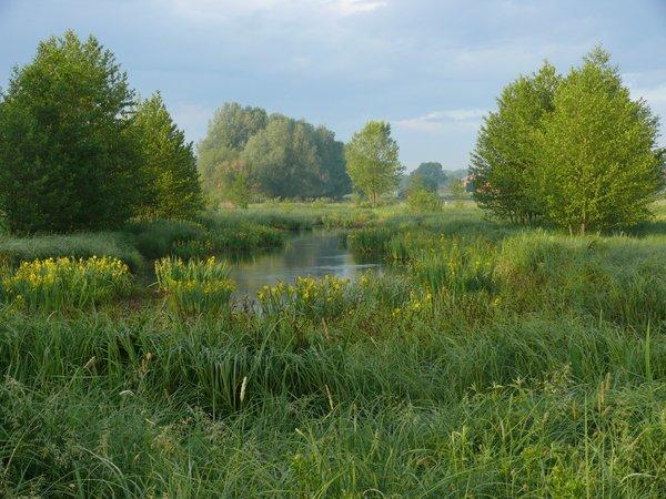 Die flachen Moortaschen bieten Lebensraum für Amphibien und Libellen (R. Joest)