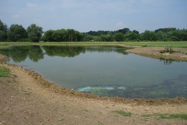 Blänken sind ein beliebter Rastplatz für durchziehende Wasservögel (P. Salm)