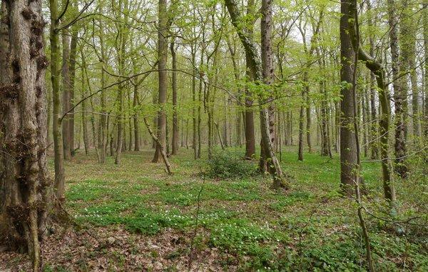 Die Wälder um Welver sind besonders wertvoll (L. Hauswirth)